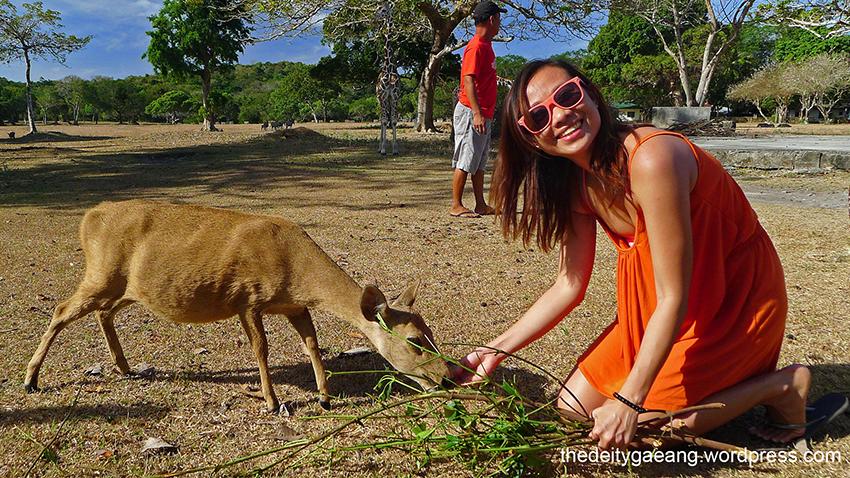 wp-tatak-marcos-calauit-island-safari-park-2