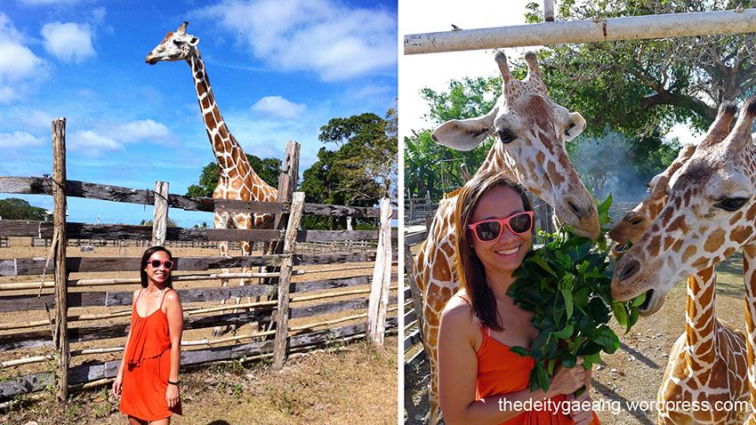 wp-tatak-marcos-calauit-island-safari-park-3